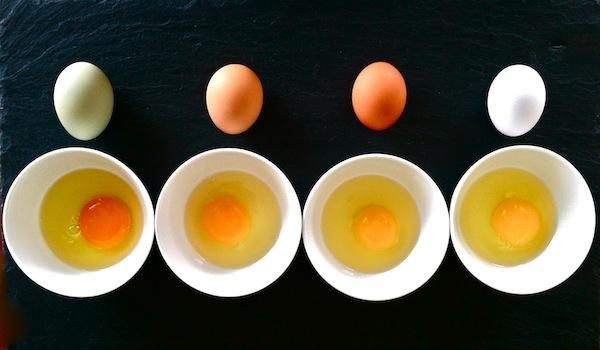pasture raised eggs ile ilgili görsel sonucu